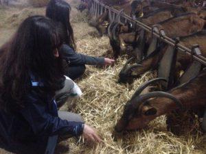 Visita escolares a una quesería - Semana Verde Asturias